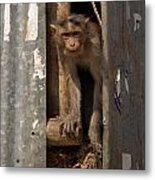 Macaque Peeking Out Metal Print