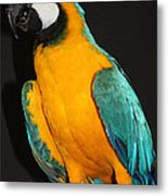 Macaw Hanging Out Metal Print