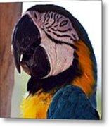 Macaw Head Study Metal Print