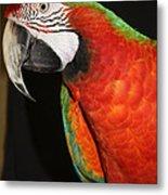 Macaw Profile Metal Print