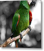 Macaw With Black And White Background Metal Print