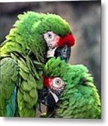 Macaws In Love Metal Print