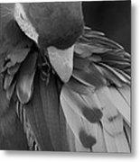 Macaws Of Color B W 16 Metal Print