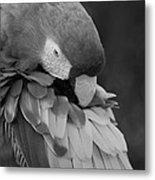 Macaws Of Color B W 17 Metal Print