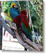 Macaws Of Color24 Metal Print