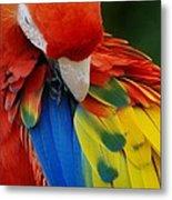 Macaws Of Color25 Metal Print