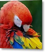 Macaws Of Color26 Metal Print