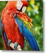 Macaws Of Color31 Metal Print