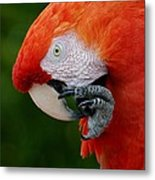 Macaws Of Color32 Metal Print