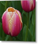 Mackinac Tulip 10386 Metal Print