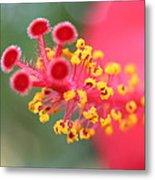 Macro Close Up Of Hibiscus Pollen  Metal Print
