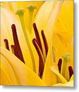 Macro Oriental Lilies Metal Print