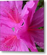 Macro Purple Azalea Flower Metal Print