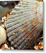 Macro Shell On Sand 4 Metal Print by Riad Belhimer