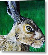 Mad As A March Hare Metal Print by Stacey Clarke