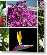 Madeiran Flower Collage Metal Print