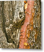 Madrone Tree Bark Metal Print