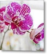 Magenta Ears Orchid Metal Print