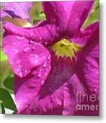 Magenta Majesty Metal Print