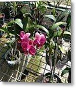 Magenta Orchid Metal Print