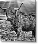 Magestic Highland Cow Metal Print