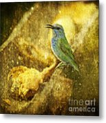 Magic At The Feeder... Metal Print
