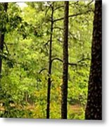 Magic Of The Golden Forest Metal Print