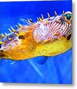 Magic Puffer - Fish Art By Sharon Cummings Metal Print