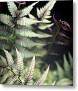 Magical Forest 1 Metal Print