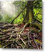 Magical Light On The Appalachian Trail Metal Print by Debra and Dave Vanderlaan