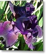 Magical Purple Iridescent  Iris Metal Print