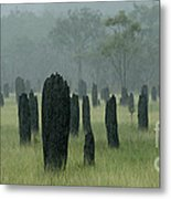 Magnetic Termite Mounds Metal Print by Bob Christopher