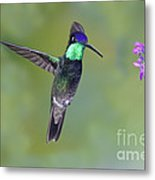 Magnificant Hummingbird Metal Print