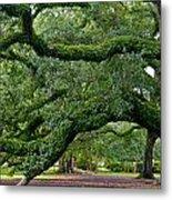 Magnificent Oak Alley Tree Metal Print