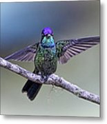 Magnificently Magnificent Hummer Metal Print
