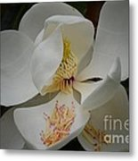 Magnolia 14-3 Metal Print