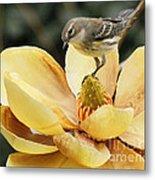 Magnolia And Warbler Photo Metal Print