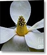 Magnolia Beauty Metal Print