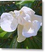Magnolia Bud Metal Print