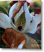 Magnolia For A Day Metal Print
