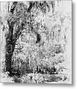 Magnolia Garden Path Metal Print