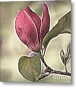 Magnolia Glow Metal Print