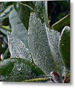 Magnolia  Leaves Metal Print