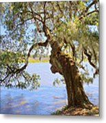 Magnolia Plantation And Gardens In Charleston Sc Metal Print