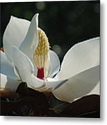 Magnolia Tiny Gem Metal Print