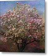 Magnolia Tree In Bloom Metal Print