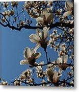 Magnolia Tree Metal Print by Rita Haeussler