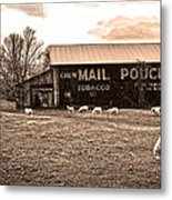 Mail Pouch Tobacco Barn And Sheep Metal Print