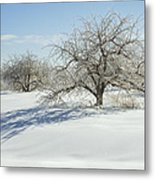 Maine Apple Trees Covered In Ice And Snow Metal Print