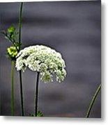 Maine Flora Metal Print